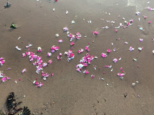 Flower petals on a Devon Beach